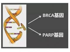 奥拉帕利,治疗卵巢癌的靶向药